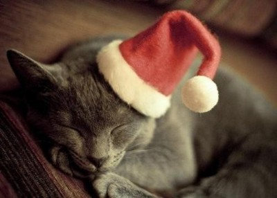 adorable-cat-christmas-cute-kitten-Favim.com-176974